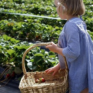 Gentle Annie Berry Farm