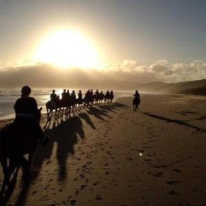 Blazing Saddles Horse Riding